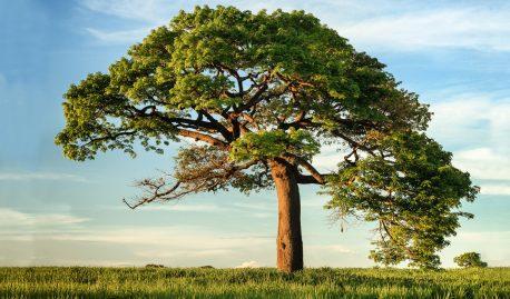 Гармония в духовной практике