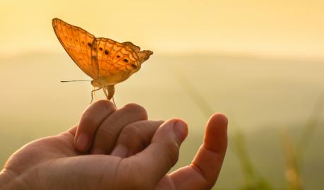 Кратко о Пути осознанности и переходу к естественному состоянию